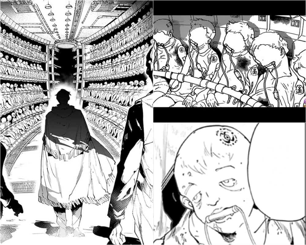 Factory Farming, The Promised Neverland