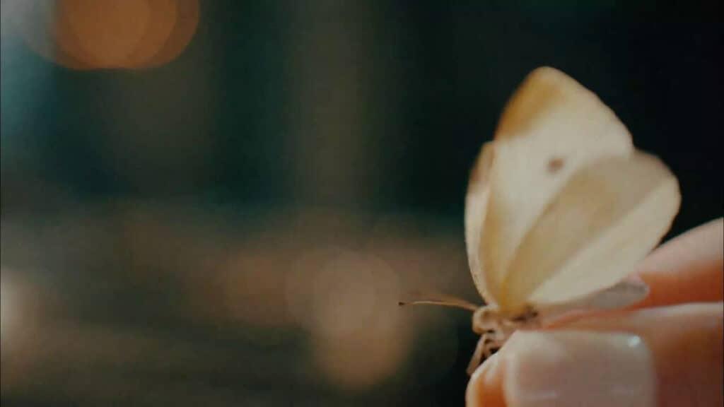 Imagem retirada da série Its Okay To Not Be Okay de uma borboleta sendo segurada