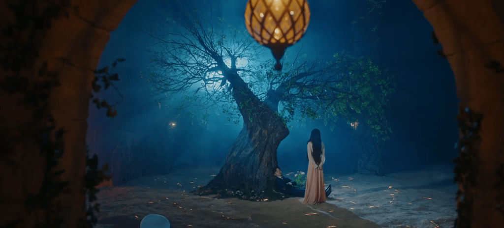 Imagem de Man Wol olhando para uma árvore